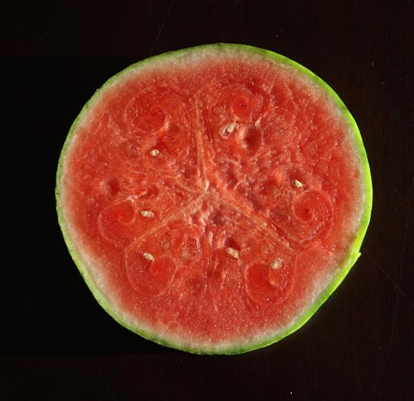 Foodist Republic - Watermelon Margarita Recipe