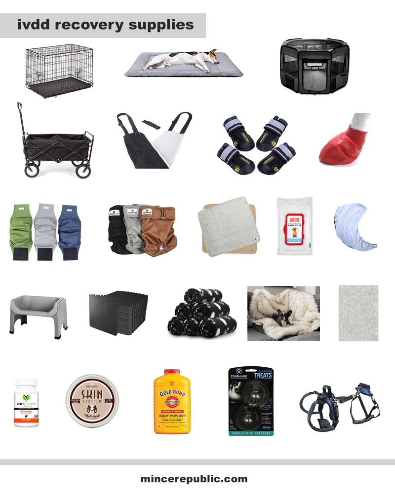 multiple images showcasing different helpful products for ivdd recovery