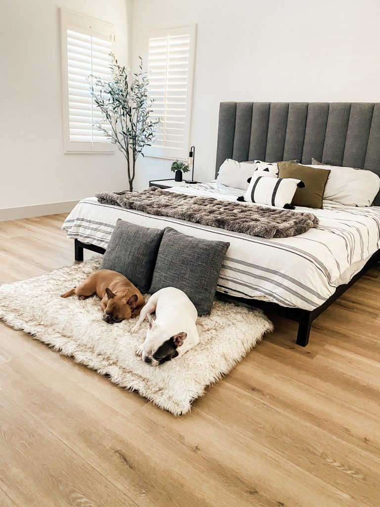 white bedroom walls, gray headboard, bed, French bulldogs laying on the ground
